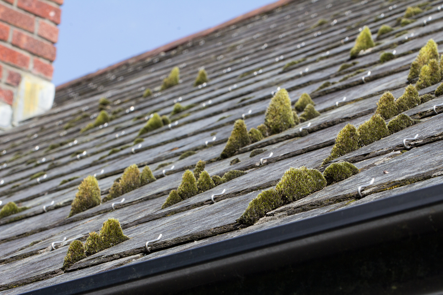How To Get Rid Of Moss And Algae On My Roof